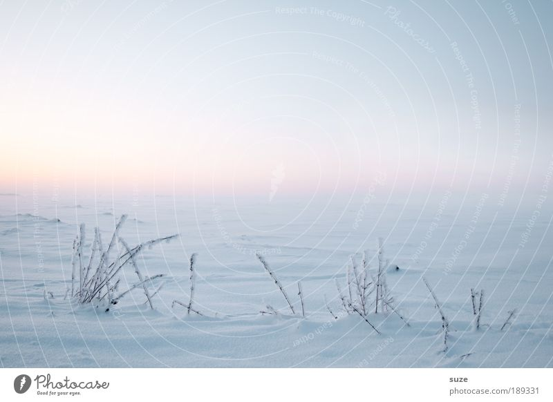 Sky Nature Beautiful White Plant Loneliness Calm Winter Landscape Environment Cold Snow Grass Bright Air Horizon