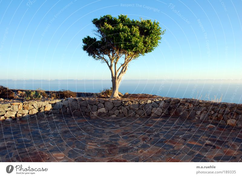 dream tree Environment Landscape Air Sky Horizon Summer Beautiful weather Tree Foliage plant Island Gomera Terrace Longing Wanderlust Loneliness Freedom