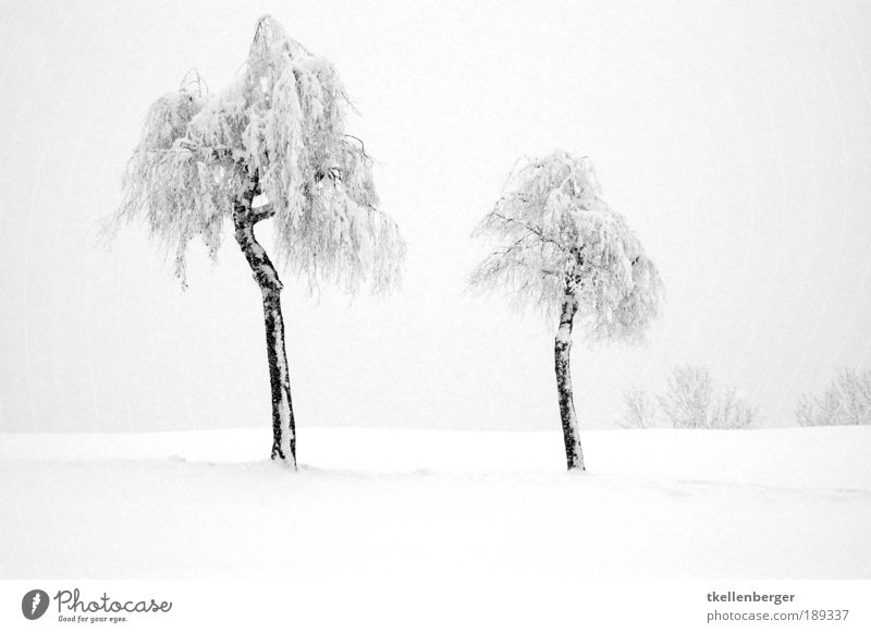 togetherness Nature Landscape Water Winter Fog Ice Frost Snow Plant Tree Park Freeze Cold Clean Gray Black White Calm Tree trunk winter fairy tale Snowscape