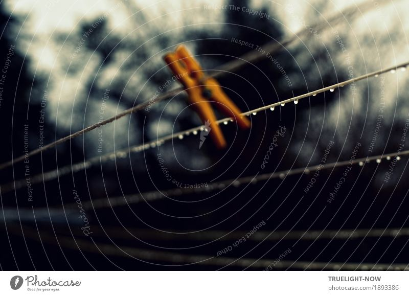 Just let it hang... Living or residing Garden Clothesline clothespin Nature Drops of water Autumn Winter Rain Tree Bushes Dark Cold Near Wet Gloomy Yellow Gray