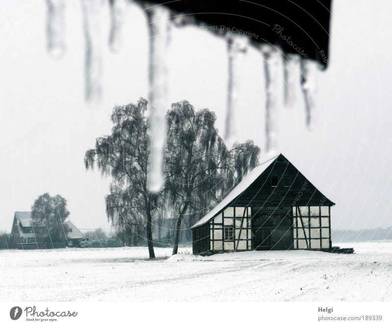 Nature Old Sky White Tree Plant Winter House (Residential Structure) Black Loneliness Cold Snow Wall (building) Window Wall (barrier) Building
