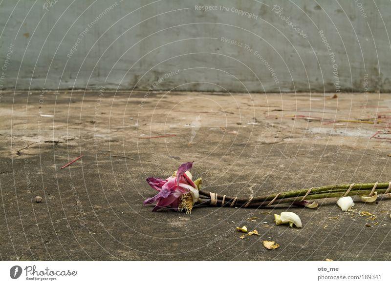 Flower Plant Death Gray Concrete Violet Shabby Still Life