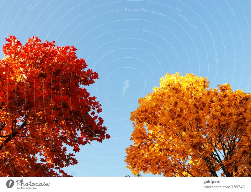 Sky Nature Plant Blue Tree Relaxation Red Landscape Leaf Environment Yellow Life Autumn Brown Leisure and hobbies Authentic