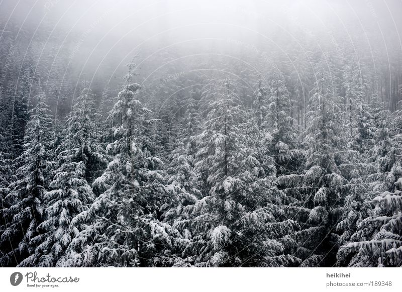 Nature White Tree Plant Winter Black Forest Cold Snow Mountain Gray Landscape Ice Fog Environment Earth