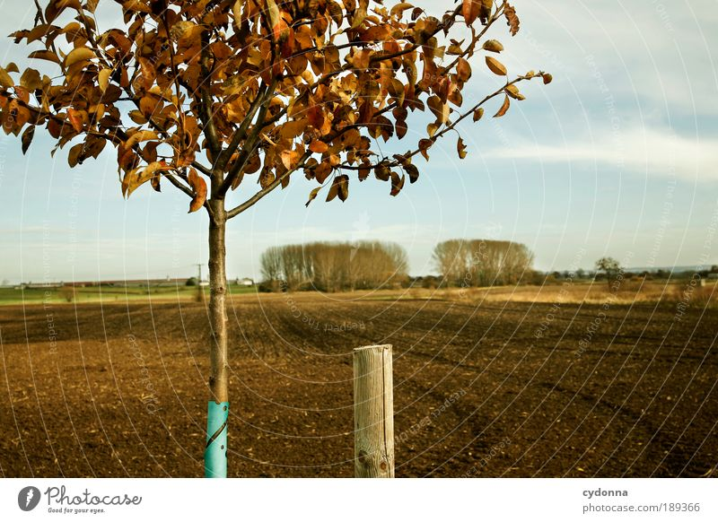 country love Harmonious Contentment Relaxation Calm Far-off places Agriculture Forestry Environment Nature Landscape Sky Autumn Tree Field Experience Life