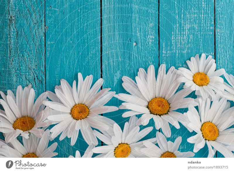 Daisy chamomile flowers on wooden background Nature Plant Blue Summer Beautiful White Flower Yellow Blossom Natural Wood Garden Feasts & Celebrations Above