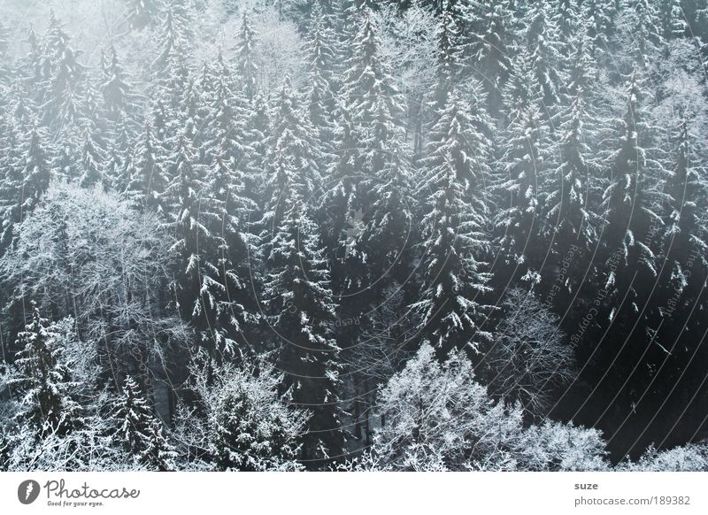Nature Plant Tree Calm Winter Landscape Black Forest Environment Dark Cold Gray Sadness Ice Weather Fog