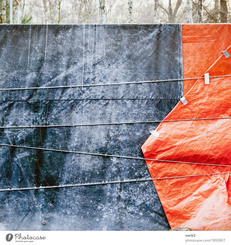 Mothballed Environment Nature Winter Ice Frost Tree Covers (Construction) Weather protection Rope Bind fast Plastic Firm Blue Gray Red Patient Calm Protection
