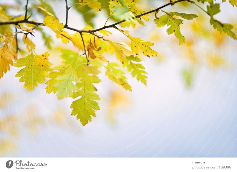 Nature Colour Relaxation Leaf Calm Yellow Autumn Bright Park Contentment Growth Fresh Gold Beautiful weather Friendliness Change