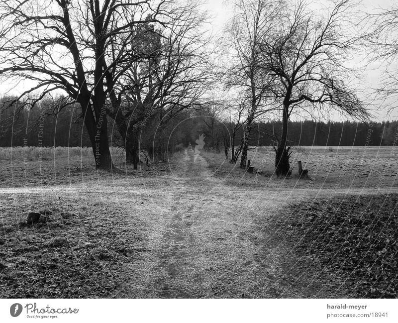 on the way Winter Tree Lanes & trails Black & white photo Mixture