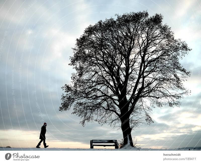 Human being Sky Nature Tree Winter Clouds Landscape Street Cold Snow Lanes & trails Think Dream Horizon Going Sit
