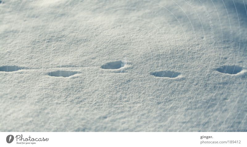 Nature White Winter Environment Cold Snow Lanes & trails Going Stripe Tracks Deep Left Forwards Right Creep Snow track