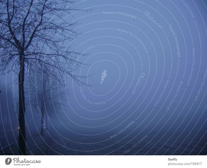 blue hour blues Blue Longing foggy Shroud of fog silent Fog Winter mood Calm Romance tranquillity Winter Melancholy melancholy melancholically Foggy landscape