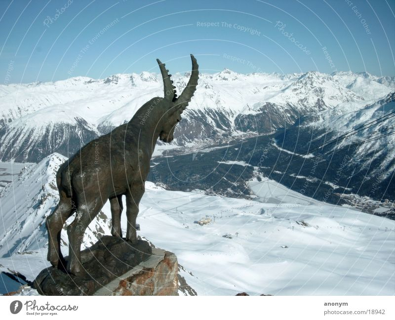 Winter Mountain Snow Snowcapped peak Statue Switzerland Ski resort Valley Snowscape Canton Graubünden Ski run Engadine Chamois