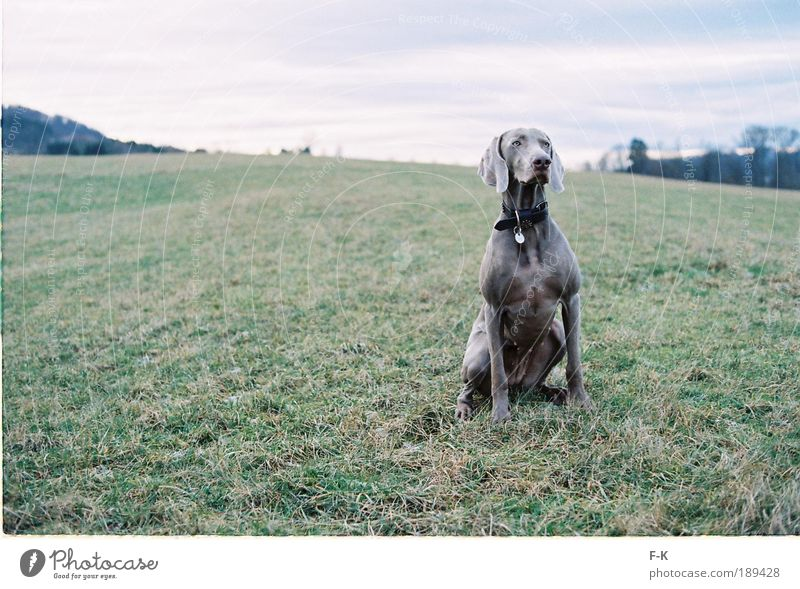 Dog Sky Nature Blue Green Landscape Clouds Animal Winter Cold Meadow Grass Gray Elegant Power Esthetic