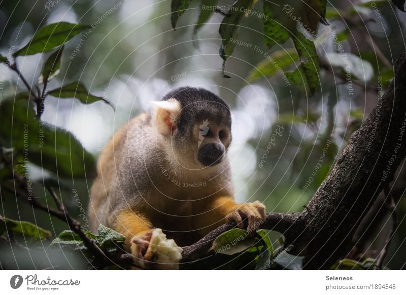 Nature Tree Leaf Animal Environment Natural Wild animal Cute Exotic Animal face Monkeys Love of animals