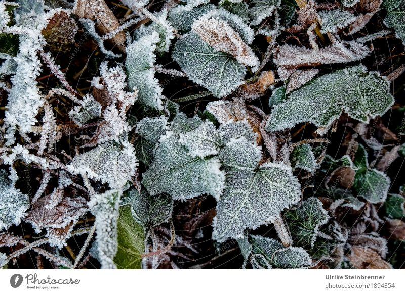 Nature Plant Green Leaf Winter Environment Cold Meadow Natural Garden Park Weather Glittering Lie Growth Earth