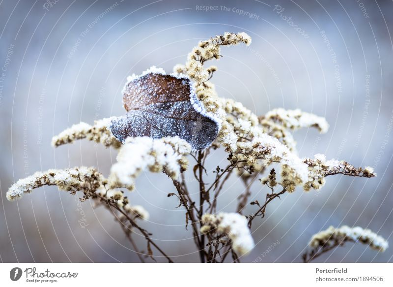 Frozen Leaf Plant Ice Frost Snow Bushes Field Forest Idyll Cold Earth Colour photo Exterior shot Close-up Detail Macro (Extreme close-up) Deserted Day Sunlight