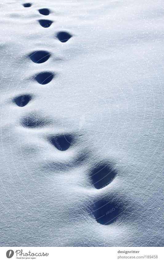 Winter Loneliness Cold Snow Death Ice Going Weather Walking Grief Adventure Frost Soft Climate Tracks Longing