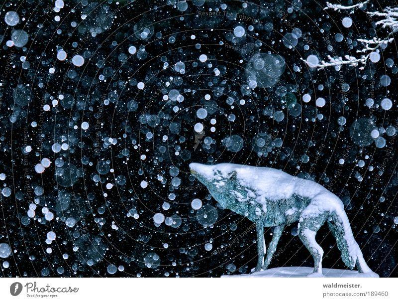 Winter Calm Loneliness Animal Snow Snowfall Ice Power Land-based carnivore Night Esthetic Adventure Frost Art Statue Freeze