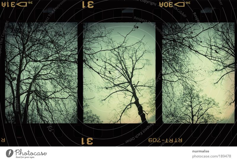 3in1 tree Art Environment Nature Landscape Sky Winter Climate Ice Frost Tree Park Forest Sign Movement To fall To swing Dark Hip & trendy Crazy Trashy Gloomy