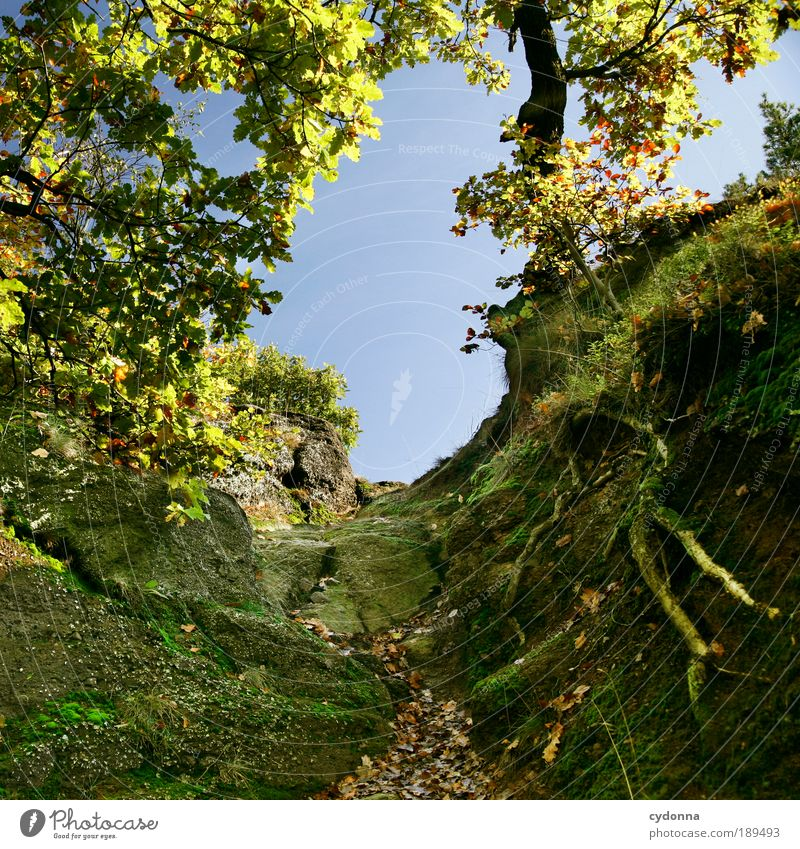 Nature Beautiful Tree Calm Far-off places Forest Relaxation Life Autumn Mountain Landscape Environment Dream Trip Rock Action