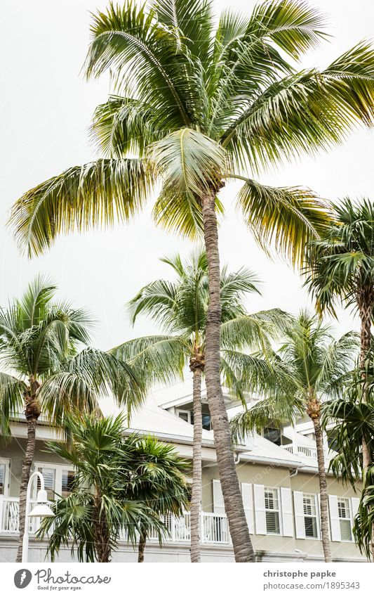 Palm trees in front of the house in Key West / Florida USA Vacation & Travel Summer vacation Tourism Beautiful weather Plant Deserted Foliage plant Wild plant
