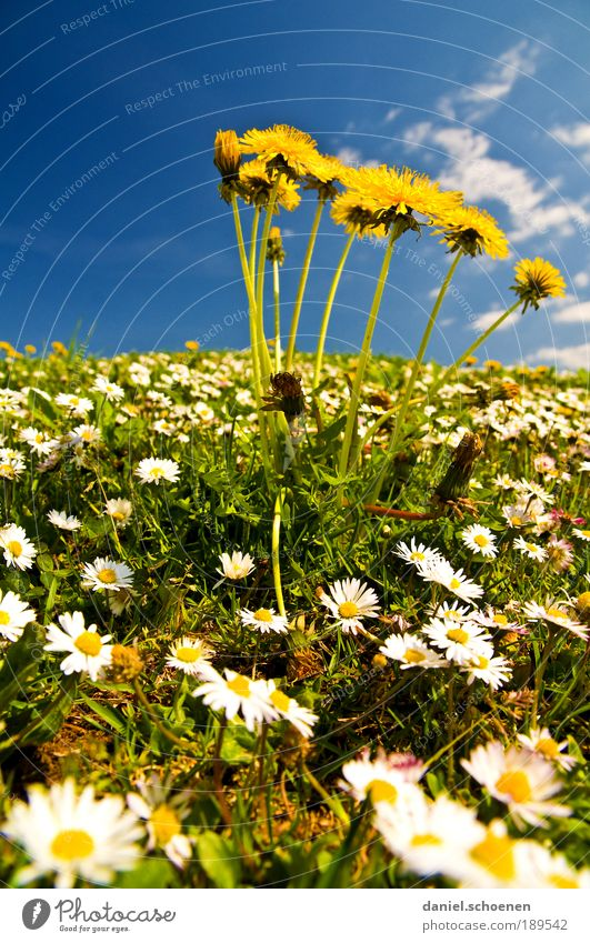 Nature Beautiful White Sun Flower Blue Plant Summer Vacation & Travel Yellow Meadow Blossom Grass Spring Environment Trip