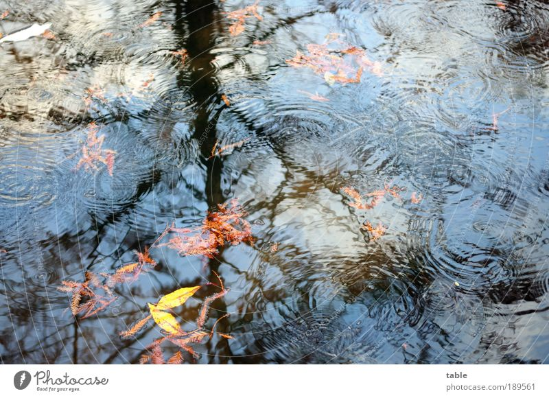 Nature Water Sky Tree Plant Leaf Forest Autumn Emotions Movement Freedom Lake Park Rain Landscape Air
