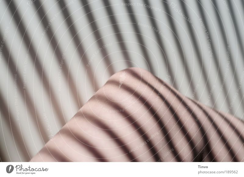 Feminine Legs Exceptional Skin Stripe Striped Visual spectacle Section of image Contour Knee Shadow play Venetian blinds Shaft of light Parts of body