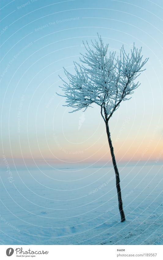 Sky Nature Plant Tree Loneliness Winter Landscape Environment Cold Snow Small Bright Horizon Ice Natural Climate