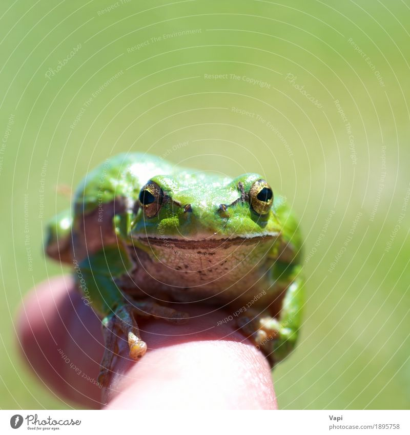 Green frog Nature Summer Colour White Loneliness Animal Environment Yellow Spring Natural Grass Small Jump Wild animal Wet