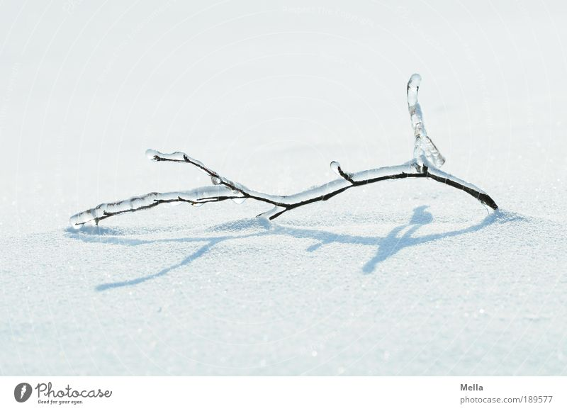 Full of winter Environment Nature Landscape Plant Winter Climate Climate change Weather Ice Frost Snow Branch Lie Bright Cold Natural White Moody Purity Bizarre