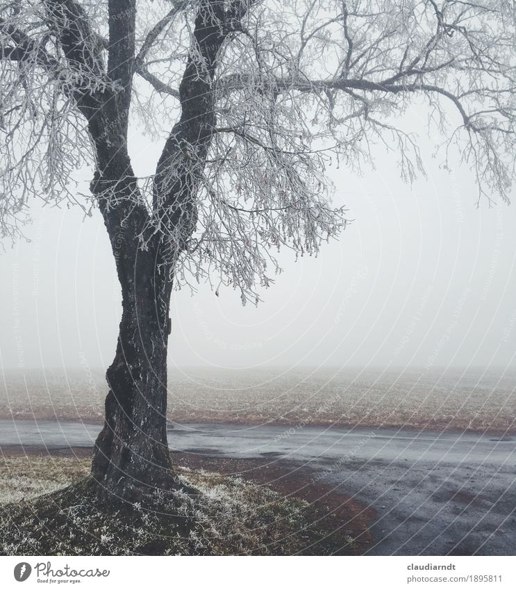winter linden Environment Nature Landscape Plant Sky Winter Bad weather Fog Ice Frost Tree Lime tree Field Cold Beautiful Gray White Loneliness Grief Sadness