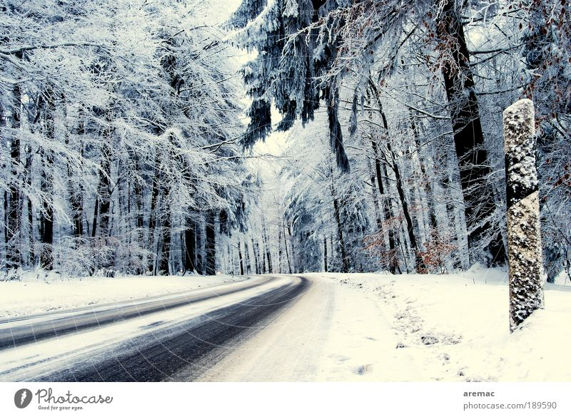 Nature White Tree Blue Plant Winter Street Forest Cold Snow Landscape Ice Road traffic Weather Frost Traffic infrastructure