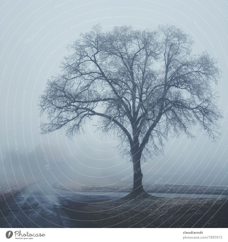 Nature Plant Tree Landscape Loneliness Winter Dark Environment Cold Sadness Lanes & trails Gray Fog Field Ice Gloomy