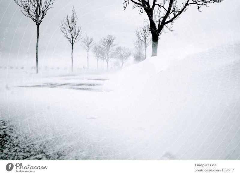 Winter Street Cold Landscape Power Might Anger Gale Storm Nature Aggression Romp Rebellious