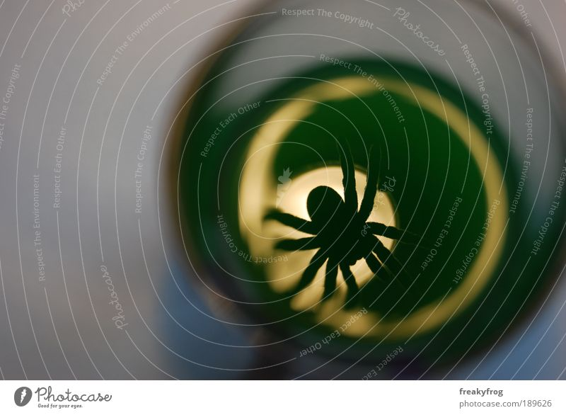 The view into the glass Spider 1 Animal Glass Exceptional Threat Dark Green Concern Pain Longing Loneliness Inhibition Horror Dangerous Distress Perturbed