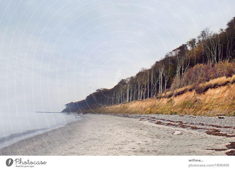 where the wind mows the grass... Landscape Beech tree Forest Coast Beach Baltic Sea Nienhagen Ghost forest Sandy beach Nature Copy Space Colour photo