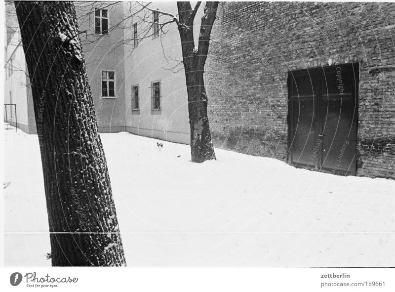 East Venice, 1988 Snow Snowfall Winter Courtyard House (Residential Structure) Tree Wall (barrier) Tree trunk