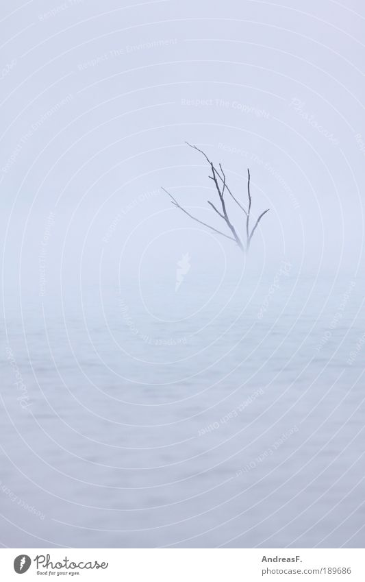 Nature Water Tree Winter Clouds Cold Autumn Gray Lake Landscape Air Ice Fog Weather Environment Wet