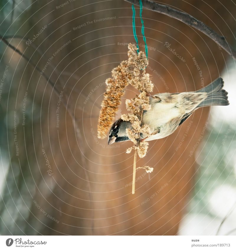 Animal Winter Small Brown Bird Wild animal Cute Feather Twig Hang To feed Beak Sing Feeding Sparrow Love of animals