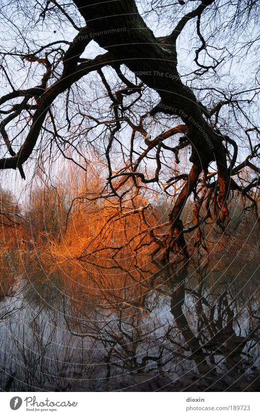 Nature Water Tree Blue Plant Winter Forest Cold Lake Park Warmth Landscape Bright Brown Weather Environment