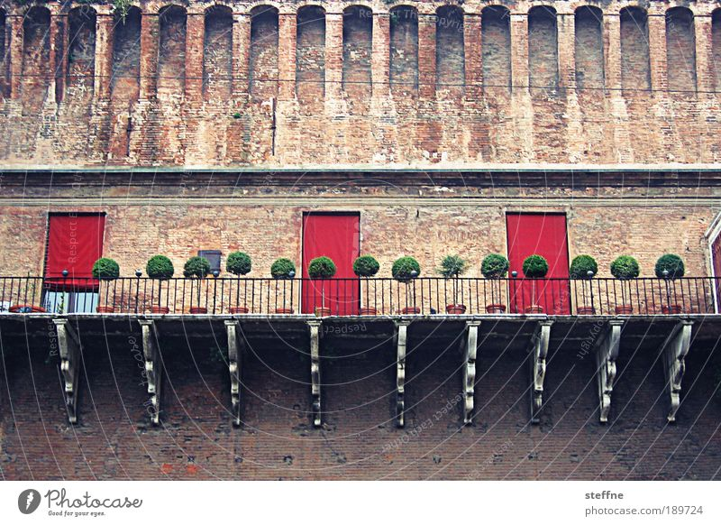 Beautiful Tree City Wall (building) Wall (barrier) Elegant Italy Castle Cute Old town Grand Dream house Ferrara