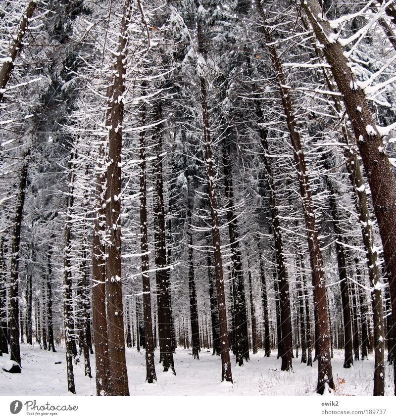 Nature Tree Plant Winter Forest Snow Wood Landscape Ice Germany Environment Large Tall Frost Stand