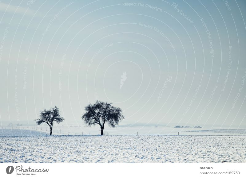 Nature Tree Winter Calm Loneliness Far-off places Cold Snow Relaxation Freedom Landscape Ice Field Time Horizon
