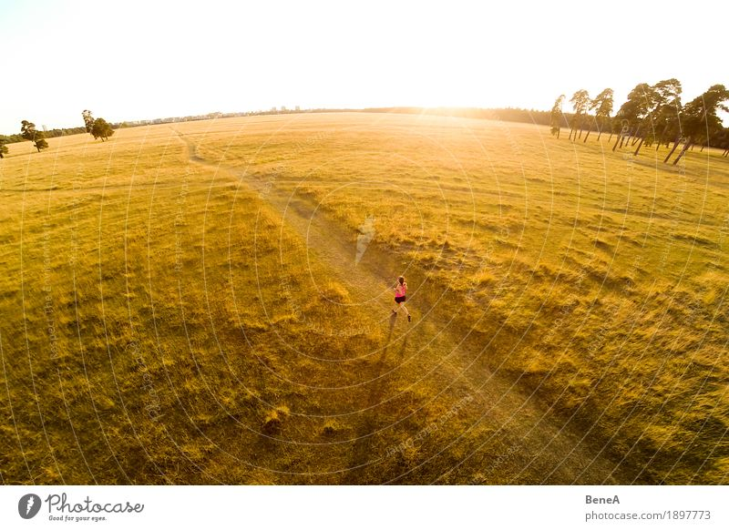 A female athlete is running into sundown across grassland Sports Woman Adults Nature Walking Running Sunset trail workout trees Wide angle Action Athlete