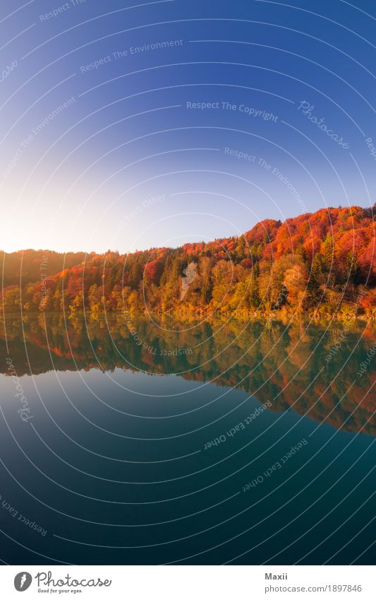 Autumn at the Inn Environment Nature Landscape Water Sky Cloudless sky Sunlight Beautiful weather Tree Forest River Glittering Blue Multicoloured Yellow Gold