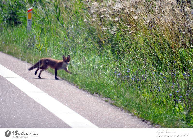 Nature Green Plant Red Animal Street Meadow Happy Lanes & trails Landscape Brown Fear Going Environment Near Authentic