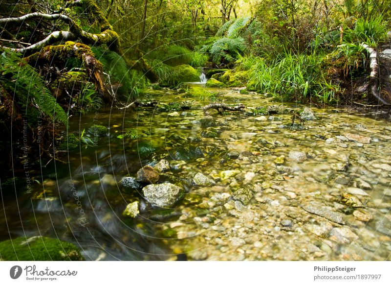 Nature Plant Summer Water Tree Landscape Leaf Calm Forest Environment Autumn Grass Hiking Bushes To enjoy Climate